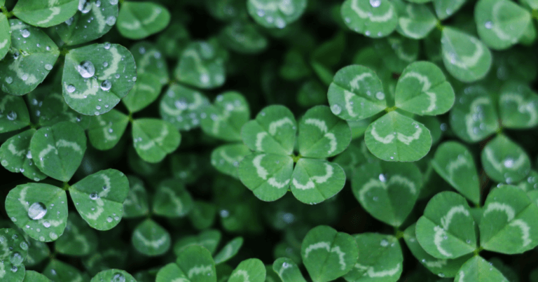 The LUCK Acronym: A New Look at Distance Learning